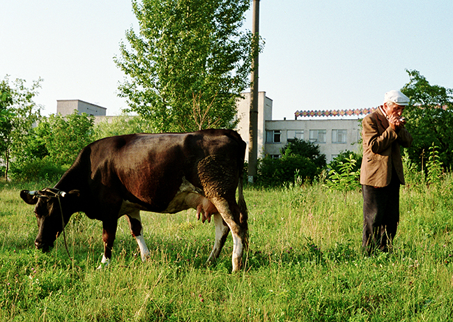 Man and Cow