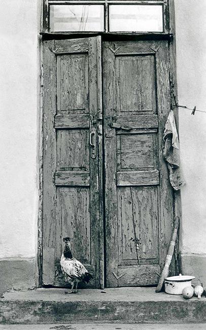 Chicken at Door